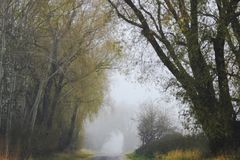 Melancholic trees on a path. Trees in a foggy and melancholic landscape on the edge of a path Royalty Free Stock Images