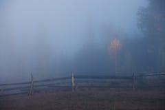 Trees at foggy morning Royalty Free Stock Image