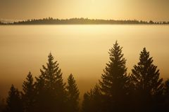 Trees on a foggy morning Royalty Free Stock Images