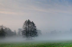 Trees on foggy morning Royalty Free Stock Photos