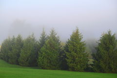 Trees Foggy Morning Royalty Free Stock Image