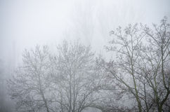 Trees in foggy winter landscape scenery Royalty Free Stock Image