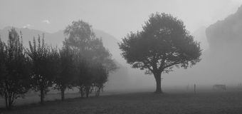 Trees on a fogy autumn morning. Autumn scene near Brienz, Bernese Oberland. Trees on a fogy morning royalty free stock images