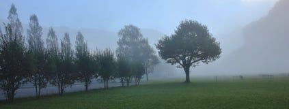 Autumn scene near Brienz, Bernese Oberland. Trees on a fogy morn. Trees on a fogy autumn morning Royalty Free Stock Photo