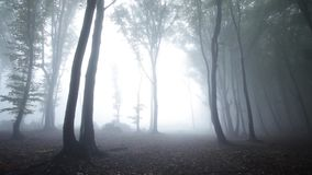Trees in the fogy forest with nature sounds stock footage
