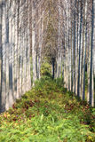 Trees and foliage Stock Photography