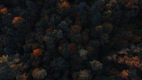 Trees with foliage at Pokrovskoe-Streshnevo park in Moscow. Trees with colorful foliage at Pokrovskoe-Streshnevo park in Moscow. No color correction. Dji Phantom stock video footage