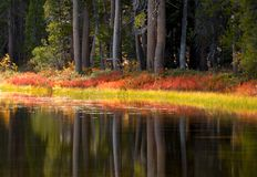 Trees and foliage reflecting their fall colors into a Yosemite p. Trees and foliage reflecting their warm fall colors into a Yosemite pond Stock Photos