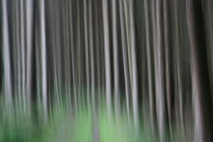 Trees and forest Stock Photos