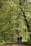 Trees and forest. Forest , trees and leaves in spring,, people in the forest Royalty Free Stock Photo