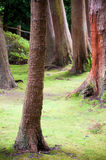Trees in the Forest Stock Photography