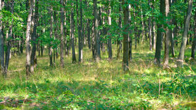 Trees in forest Stock Photo