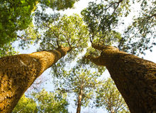 Trees in the forest Stock Photos