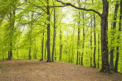 Trees in forest Stock Image