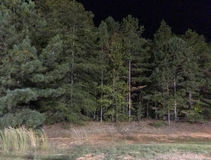 Trees in forest against night skies Stock Photos