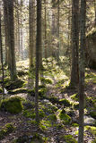 Trees in forest at backlight Stock Photo