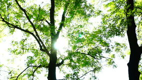 Trees in forest with bright afternoon sun and ray, rotations stock video footage