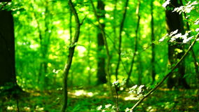 Trees in forest with bright afternoon sun and rays and sound. stock footage