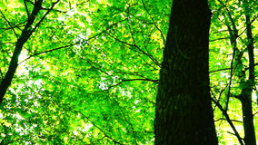 Trees in forest with bright afternoon sun and rays and sound, rotation stock video footage