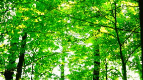 Trees in forest with bright afternoon sun and rays and sound, tilt stock footage