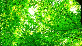 Trees in forest with bright afternoon sun and wind  and rays and sound, rotation. Trees in forest with bright afternoon sun and rays stock footage