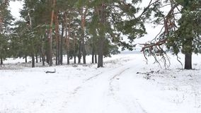 Trees forest christmas nature tree, snow frost cold landscape the winter. Trees forest christmas nature tree, snow frost cold landscape winter stock video footage