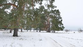 Trees forest christmas tree, nature snow frost cold the winter landscape Stock Photos