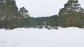 Trees forest christmas tree, snow frost cold the winter nature landscape stock video footage