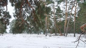Trees forest christmas tree, snow nature frost cold landscape the winter. Trees forest christmas tree, snow nature frost cold landscape winter stock video