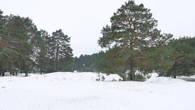 Trees forest christmas tree, snow nature frost cold the winter landscape stock video