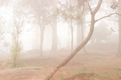 Trees in the forest covered in fog during autumn. Royalty Free Stock Photography