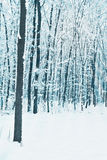 Trees in forest covered with snow Royalty Free Stock Images