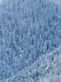 Trees of a forest  covered with snow and ice Stock Photos