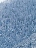 Trees of a forest  covered with snow and icel Royalty Free Stock Photos
