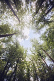 Trees in the forest - the crown of leaves against the sky Stock Image