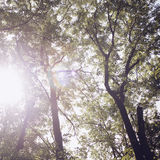 Trees in the forest - the crown of leaves against the sky Stock Photos