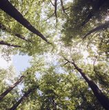 Trees in the forest - the crown of leaves against the sky Stock Images