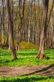 Trees in forest early spring Royalty Free Stock Images