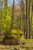 Trees in forest in the spring Stock Images