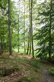 Trees in a forest Royalty Free Stock Photography