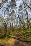 Trees in forest early spring royalty free stock photography