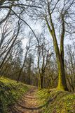 Trees in forest early spring royalty free stock photo
