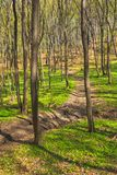 Trees in forest early spring stock photo
