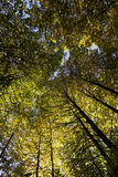 Trees in forest in fall Stock Photography