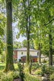 Trees in forest with flora and house with garden. In the background royalty free stock photography