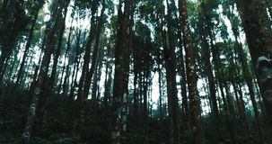 Trees in the forest. Footage of the trees in the forest against sky stock footage