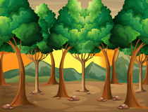 Trees at the forest. Illustration of the trees at the forest Royalty Free Stock Photo