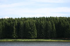 Trees. Forest by the lake on a sunny summer day Stock Image