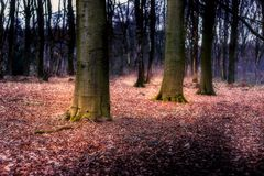 Trees. Forest in Leudal, Netherlands Royalty Free Stock Images