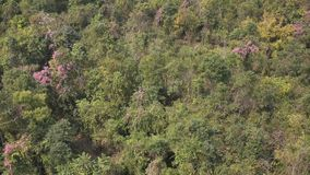 Trees at forest in Mandalay, Myanmar.  stock video footage